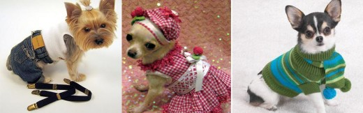 Your dog can be the star of the canine (cat)walk with fancy dog clothes!