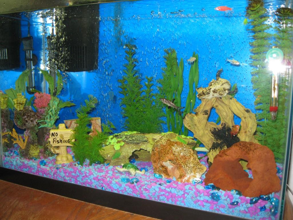 Freshwater aquarium fish information 2017 fish tank for Fresh water tank cleaning fish