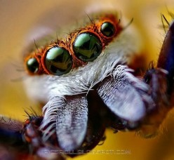 Pretty Spiders