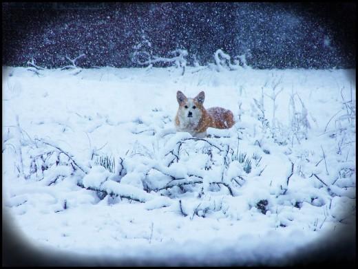 Chilly dog.