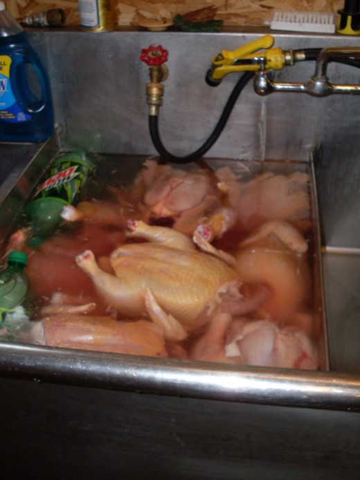 Arrange them among the ice bottles, so they begin cooling quickly. Chicken meat deteriorates quickly.