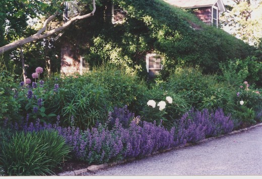 K02 - You gotta love the lavender.  This garden was begun over 20 years ago, hence all the growth on the guest house.