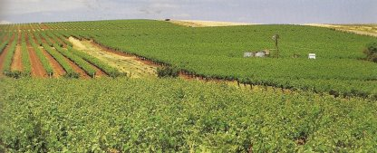 Vineyards in the Clare Valley. Photo © Nemingha 2009.
