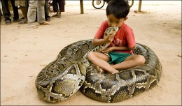 Kids and giant snakes are better apart.  A game for the child: thoughts of prey for the python. Sun Paper photo