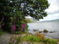 A view not far from where we stayed at Lannoch Rannoch - beautiful heather everywhere - it usually blossoms late August and September. Do not copy - photographer: Ruth Elayne Kongaika
