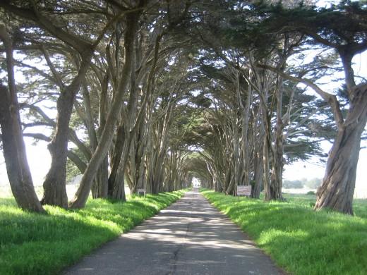 Pathway to Sonoma
