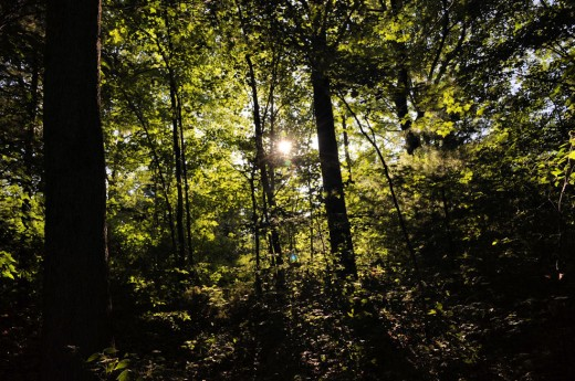 Evening light tries to penetrate the woods.