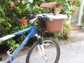 Biking With My Dog (Review of the Tagalong Wicker Basket)