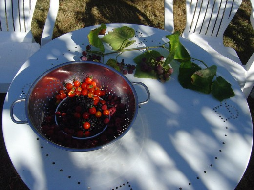 Our garden is full of fresh fruit and vegetables