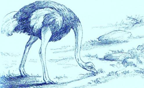 Ostrich - Art by ~ Jerilee Wei