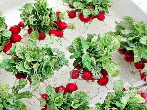 Very Nice Radish Crop grown indoors