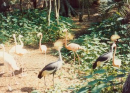 African Crowned Cranes and Chilean flamingos.