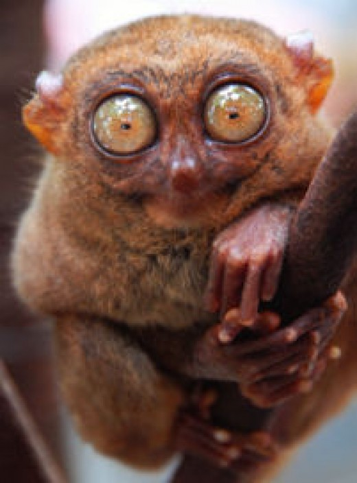 Weird looking animals 25 wacky weird creature images