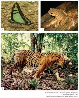 Some fauna live in Bukit Tigapuluh National Park (Riau-Sumatra). Photo LHI-natureindonesia.org