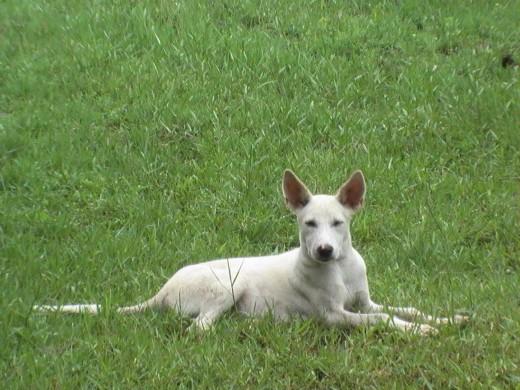 Maldita, the mischievous she-dog