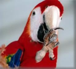 Pet Birds Are Beautiful
