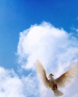 The dove is a symbol of the peace and solace found in Jesus Christ.