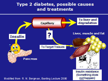 Diabetes fat metabolism instruction sheet