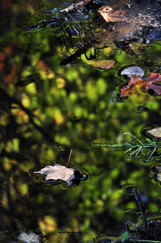The creek is coming into its loudest time of year when colors will reflect in its quiet pools.