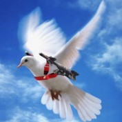 arun kuruvilla profile image
