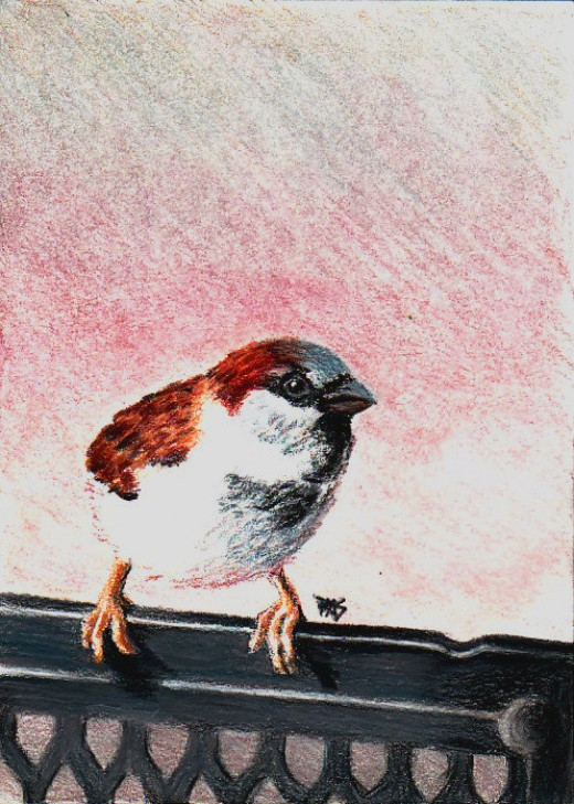 Cheeky Sparrow in colored pencils on Stonehenge paper by Robert A. Sloan