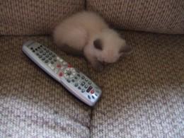 Not bigger than a remote