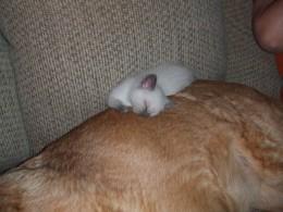 Sushi sleeps on Bailey