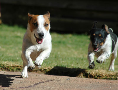 A life without pain allows your dog to run free again