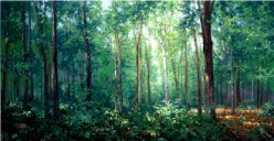 The Sacred Grove where the young boy Joseph Smith prayed to know which Church was true.