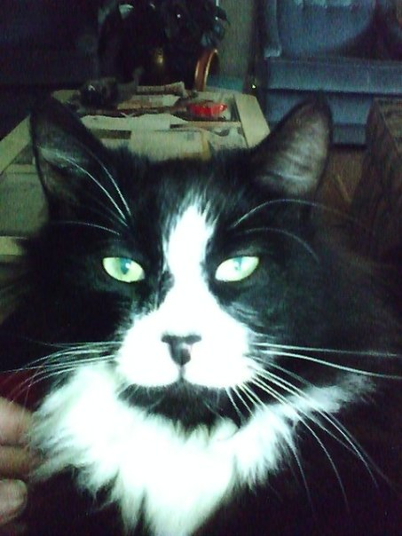 "I think this cute cat picture is a classic: I just love the look on Zorro's face...so nonchalant and ""catty"", don't you think?"