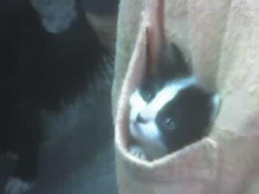I love this cat picture of Perdy when she was a kitten. It always makes me smile!