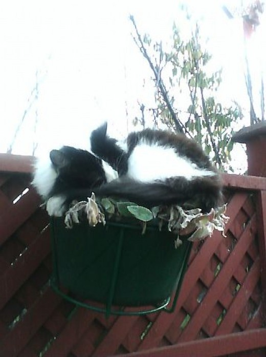 This planter turned out to be one of Perdy the cats favorite sleeping spots. Getting a picture of her here was no problem because this is what she did everyday.