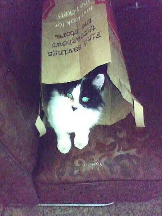FGreat shot of Perdy in the bag. Want a great shot of your cat? Try a bag and have your camera ready. Cats are naturally curious and just might pop in the bag for you. The resolution and lighting wasn't that great on this picture but it's still cute.