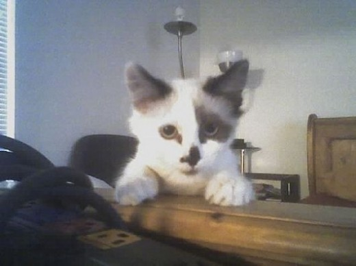 I love this cat picture of Shasta when she was a kitten. Naturally curious.