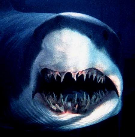 Genetically Weaponized, Killer Shark