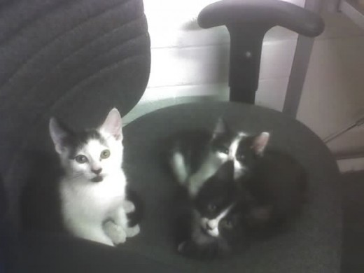 I ran across this one in my PhotoBucket account. It is a picture of our adored 3 kittens (we miss you Elvis!)