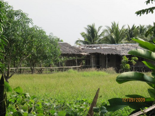 Some of the nipa huts