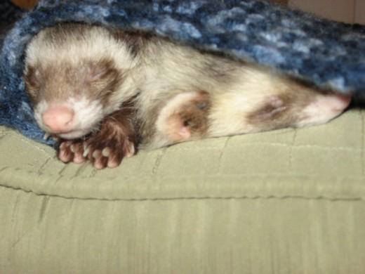 Peedie and Kit-Kat (Sisters)