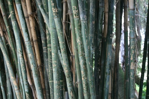 Bamboo gardens are found throughout the property and some school children have even carved their names as dates into one forest of bamboo trunks!