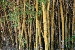 Many types of Bamboo from many parts of the world grow here in forests that are at least 15 degrees cooler inside!
