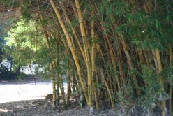 Pictures do no justice to this lovely timber, bamboo is fast growing and helps with keeping our homes eco-friendly!
