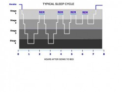 How the brain initiates and regulates sleep