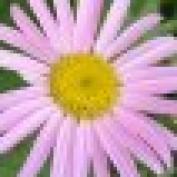 Daisydot profile image