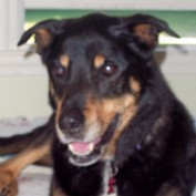 pawsible profile image