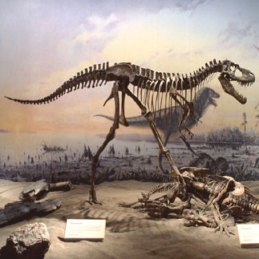 A diorama at the Royal Tyrrell