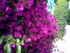 Feng Shui Gardening: The Wealth gua