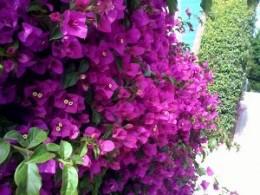 Good flower choice!