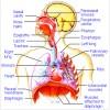 RESPIRATORY SYNCYTIAL VIRUS / RSV