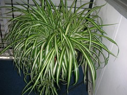 Images Of Common House Plants