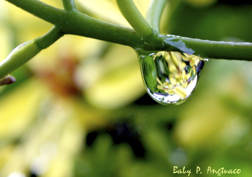 reflection caught in a raindrop